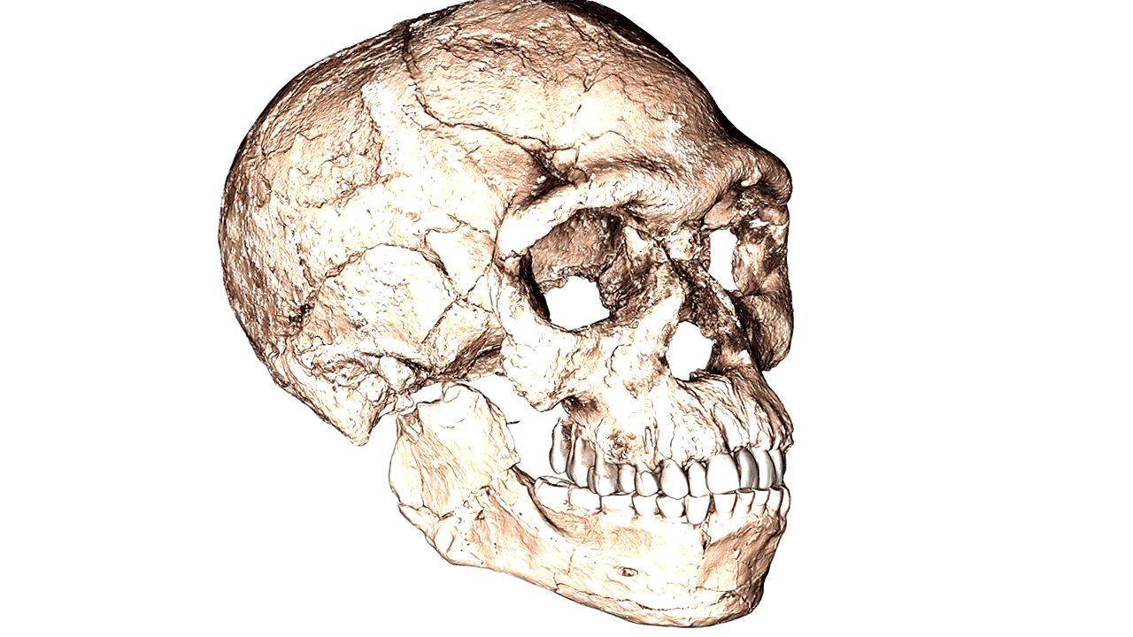 ¿Qué edad Tiene el Homo Sapiens? - paleoantropologia - 20170610 stp001