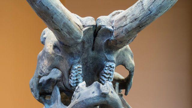 Un artículo sugiere una revisión importante a la migración humana y estimula el debate - paleoantropologia - SDMastadon 640