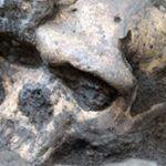 Las Plantas y el Clima Pueden Ser Clave Para Entender la Extinción de los Neandertales - antropologia-fisica - Skull 150x150