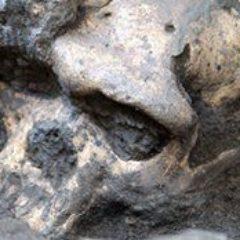 Las Plantas y el Clima Pueden Ser Clave Para Entender la Extinción de los Neandertales