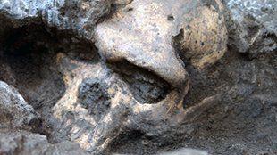 Las Plantas y el Clima Pueden Ser Clave Para Entender la Extinción de los Neandertales - antropologia-fisica - Skull