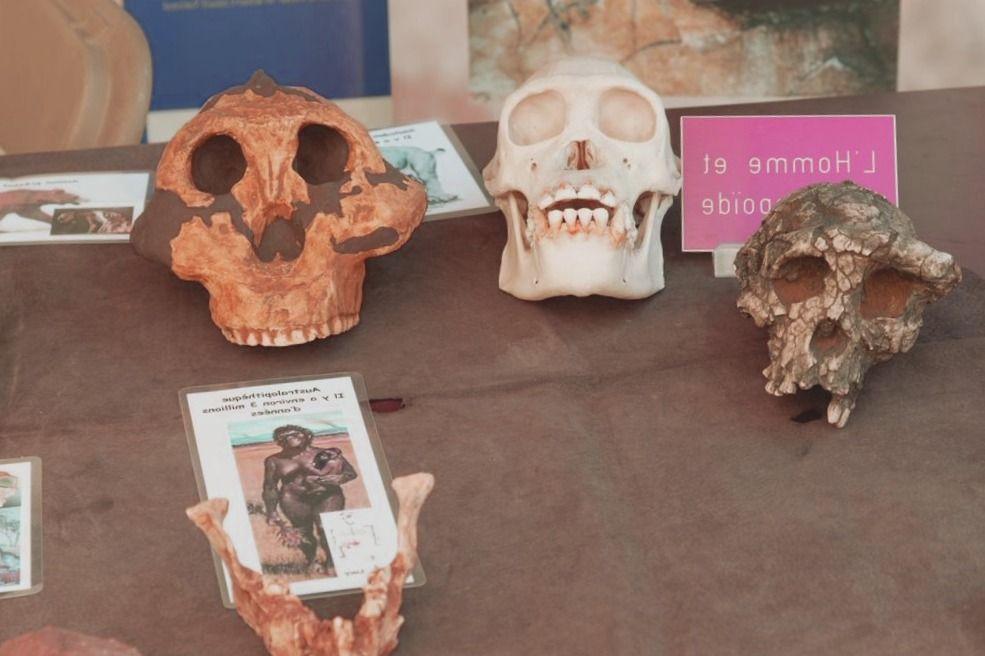 Atracciones en Egipto - Las 10 mejores atracciones turísticas de Egipto - antropologia-arqueologica - antropologia antigua aristoteles