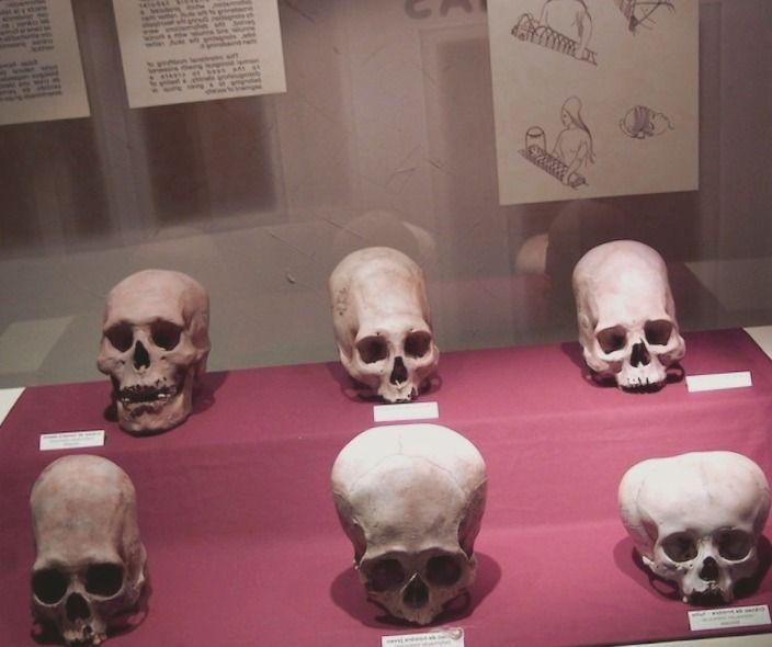 ¿Qué Puedo Hacer con un Título en Ciencia Forense? - antropologia-forense, antropologia-fisica - antropologia con orientacion arqueologica