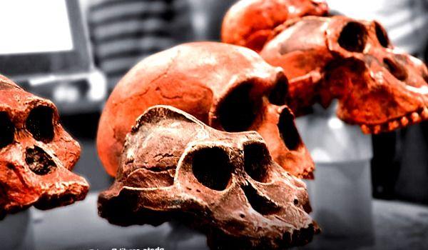 """¿Quién fue """"Lucy""""?Hechos rápidos sobre un ancestro humano temprano - paleoantropologia, antropologia-fisica - antropologia cultural en colombia"""
