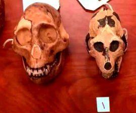 Naturaleza y Cultura Desde la Antropología - antropologia-cultural - antropologia cultural segun autores 270x225