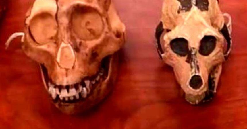 Naturaleza y Cultura Desde la Antropología - antropologia-cultural - antropologia cultural segun autores 860x450