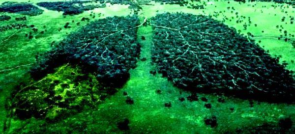la antropologia ecologica estudia la relacion entre seres humanos y su entorno ambiental
