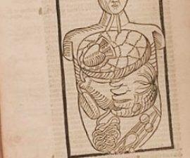 Genes y Diabetes - paleoantropologia - antropologia filosofica prezi 270x225