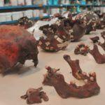 La antropologia forense estudio