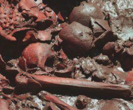 ¿Qué se necesita para obtener un título en línea en Forenses? - antropologia-de-la-educacion - antropologia medieval yahoo 270x225