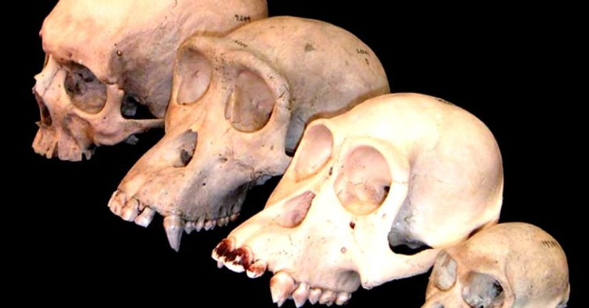 ¿Quien fue Claude Levi-Strauss? - antropologia-cultural - antropologia social y cultural foro 860x450