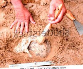 Qué es la Antropología Ecológica - antropologia-cultural - antropologia social y cultural gandulfo 270x225